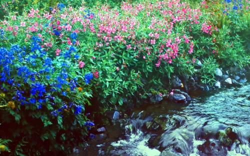 Всюду цветы