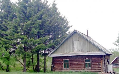 Домик окнами в лес