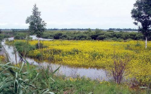 Желтый разлив