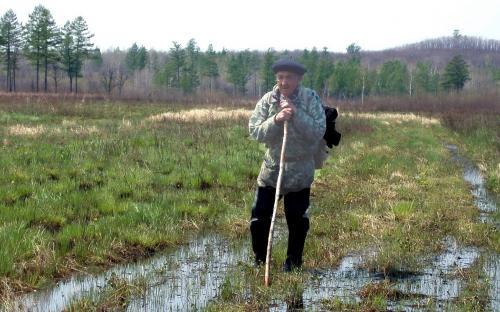 Лягушачье болото