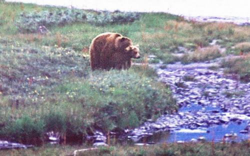 Медвежьи страсти