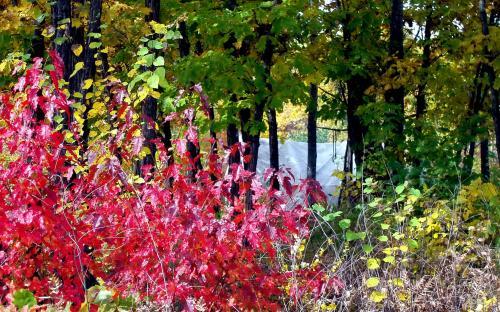 Мой табор в красках сентября