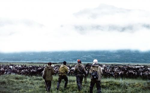 Пастухи за работой