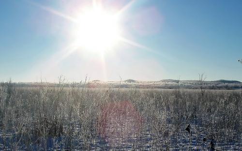 Студеное солнце