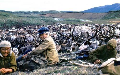 Табун на отдыхе – у пастухов перекур