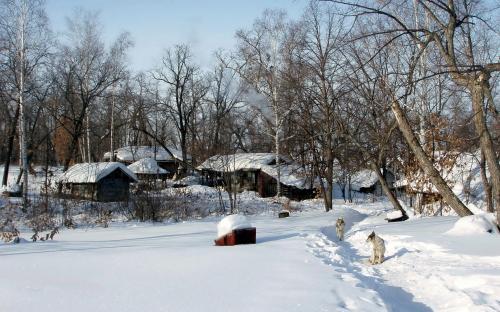 Утопая в снегах