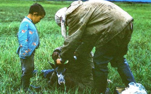 Чукчонок и олененок
